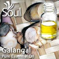 Pure Essential Oil Galangal - 50ml
